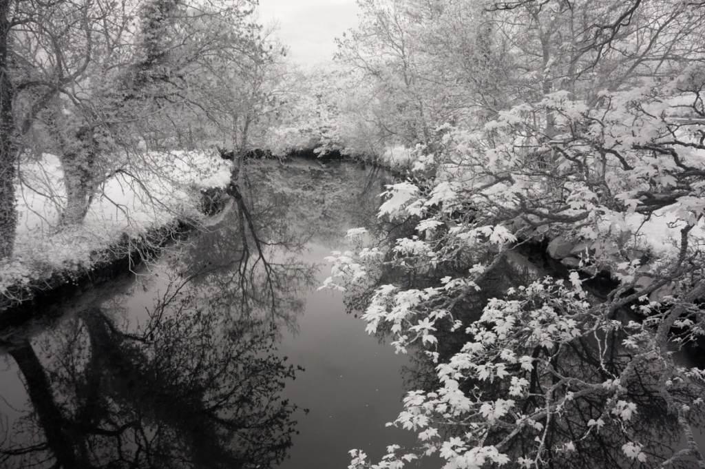 Belvoir Park Forest fine-art
