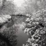 Belvoir Park Forest, Belfast, Ireland | fine art infrared black and white photography by Jacqueline LaRocca