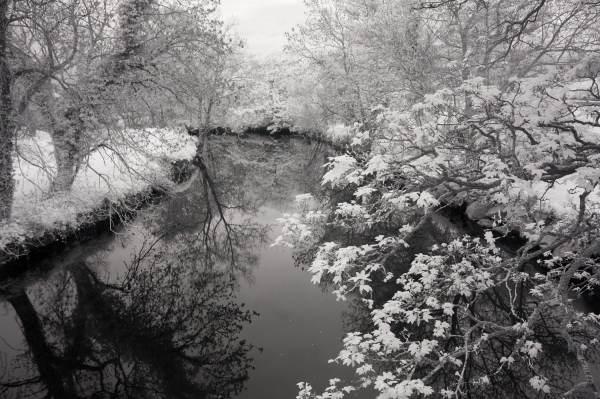 Belvoir Park Forest, Belfast, Ireland | black & white photography |