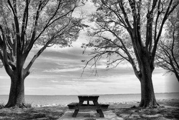Black Walnut Point, Tilghman Island, Maryland | black & white infrared photography |