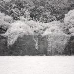 Coole Park Galway, Ireland | fine art infrared black and white photography by Jacqueline LaRocca