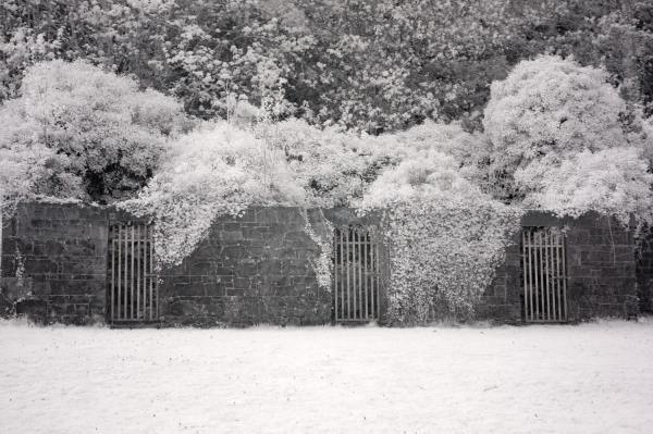Coole Park Galway, Ireland | black & white infrared photography |