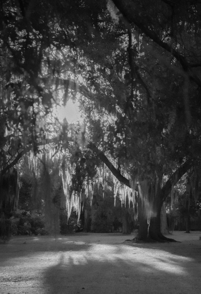 La Grange Plantation |  black & white photography