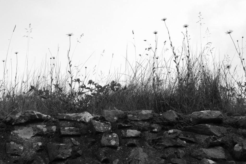 Stone Wall Scotland, black & white photography