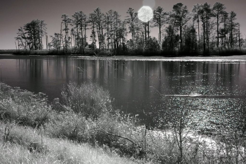 Sun over Blackwater black and white photography print by Jacqueline LaRocca