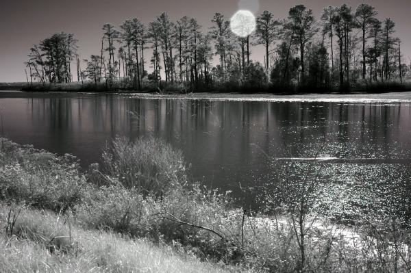 Sun over Blackwater Refuge, Maryland | black & white infrared photography |