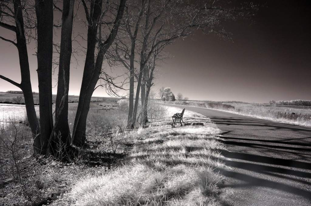 Bench on Blackwater Refuge | black and white photography print by Jacqueline LaRocca