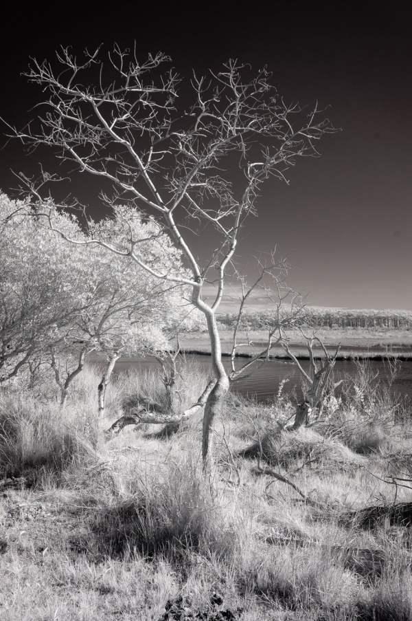 Tilghman Island Tree-fine-art-photography