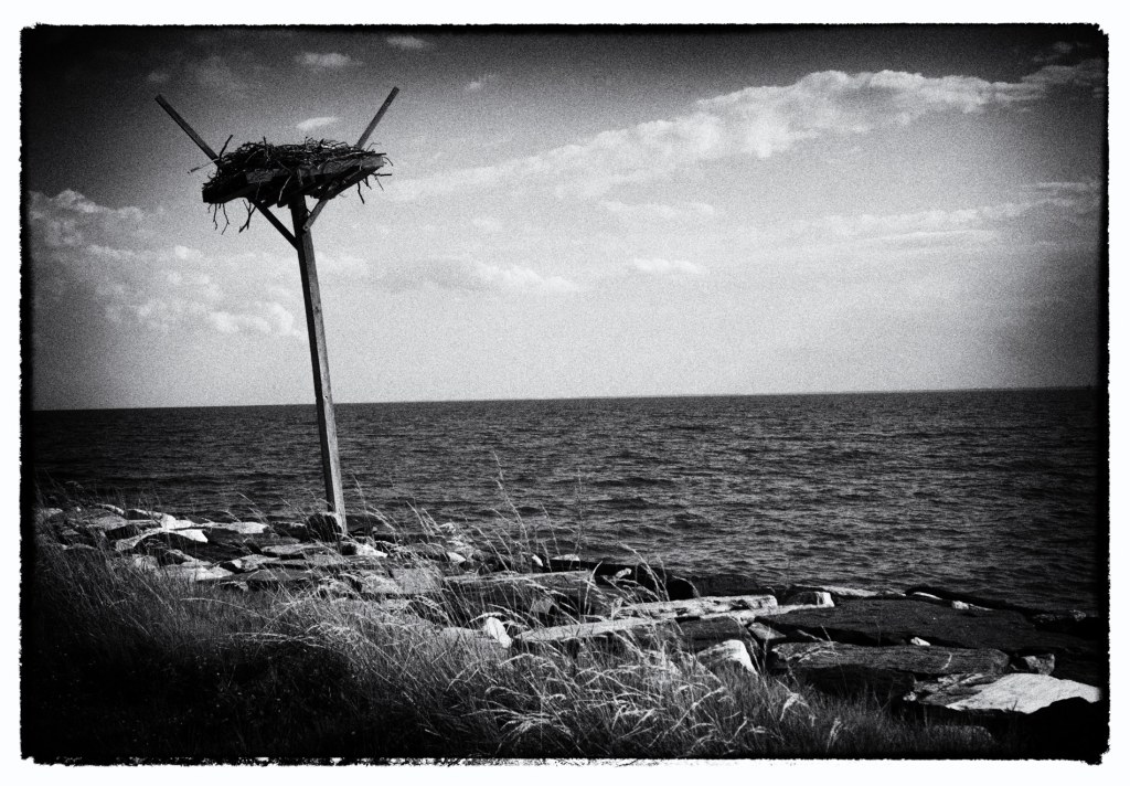 Bird Nest Tilghman Island MD | black and white photography by Jacqueline LaRocca