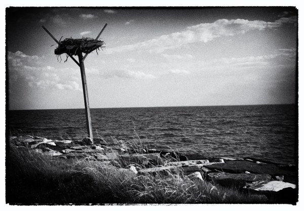 Bird Nest Tilghman Island MD