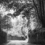 Castletown House Road, Kildare, Ireland | fine art infrared black and white picture for sale by Jacqueline LaRocca