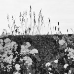 Stone Wall, County Clare, Ireland fine art infrared black and white photography by Jacqueline LaRocca