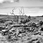 Stonewall 5, County Clare, Ireland fine art infrared black and white photography by Jacqueline LaRocca