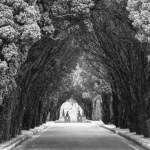 Yew Tree Pathway, Glasnevin Cemetery, Dublin, Ireland fine art infrared black and white photography by Jacqueline LaRocca